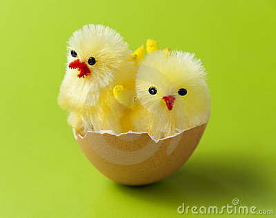 Cute chickens in easter egg shell