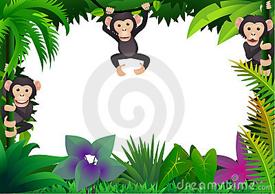 Cute chimpanzee in the jungle
