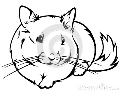Chinchilla Vector Royalty Free Stock Image Image 29768986