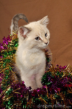 Really cute christmas kitten 5