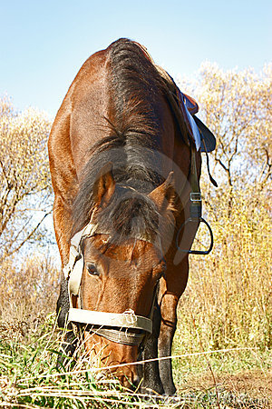 Cute country horse
