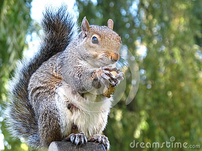 Cute and cuddly squirrel