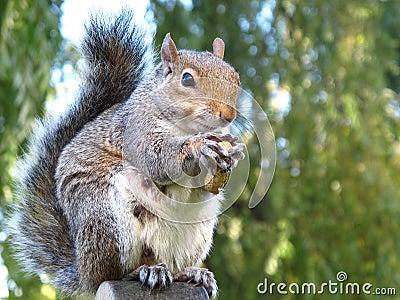 Cute and cuddly squirrel