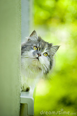 Cute curious cat.