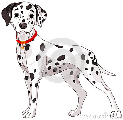 Free Cute Dalmatian Dog Stock Photography - 42796832