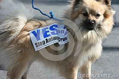 Cute Dog and 2008 Election