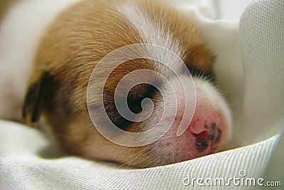 Cute dog baby