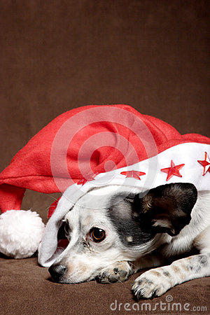 Cute dog with Christmas hat
