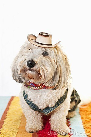 Cute dog in cowboy costume