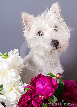 Cute Dog with Flowers