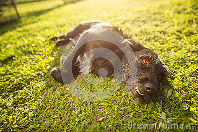 Cute dog lying in the grass