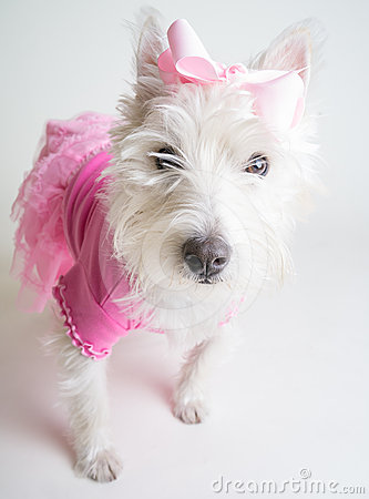 Cute Dog in Pink Tutu
