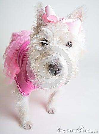 Cute Dog in Pink Tutu
