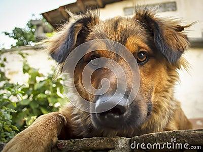 Cute dog posing