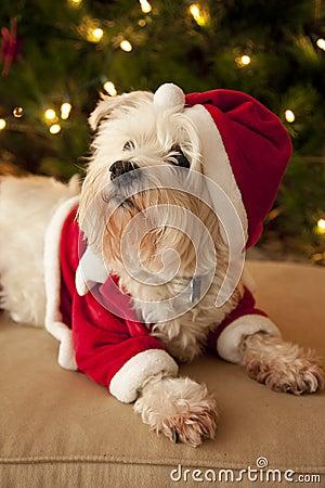 Cute dog in Santa costume