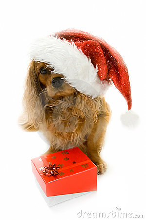 Cute dog in Santa hat and box with gift