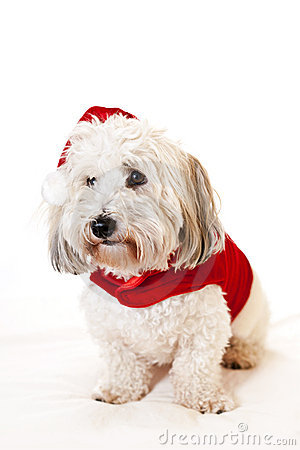 Cute dog in santa outfit