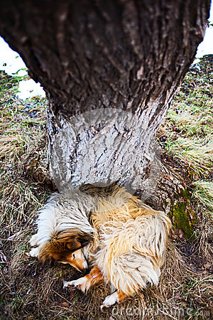 Dog sleeping under tree