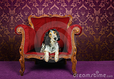 Cute dog in velvet armchair