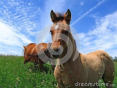 Cute dun filly