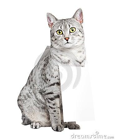 Cute Egyptian Mau Cat