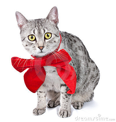 Cute Egyptian Mau Cat with Red Bow