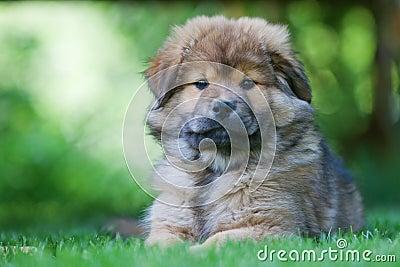 Cute Elo puppy