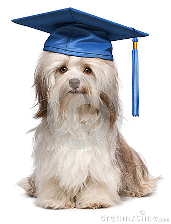 Baby Graduation Cap And Gown Gowns Ideas