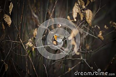 Bird between Branches