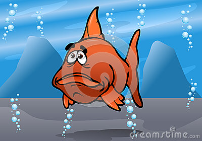 The cute fish red bash