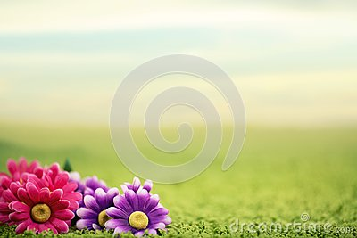 Cute flowers on lawn