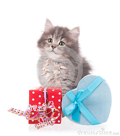 Free Cute Fluffy Kitten Royalty Free Stock Images - 66393979