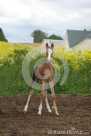 Cute foal in field