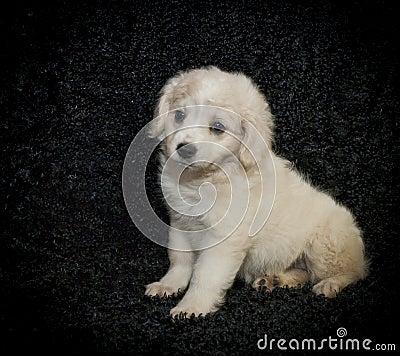 Cute Fuzzy Puppy