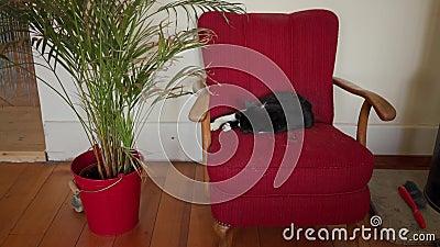 Cute gattino bianco e nero che dorme su una poltrona rossa d'annata vicino alla pianta in pentola video d archivio