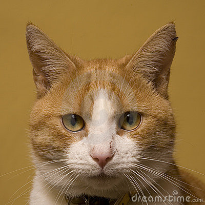 Cute ginger cat portrait