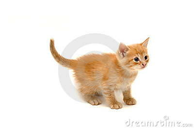 Cute ginger kitten isolated on white