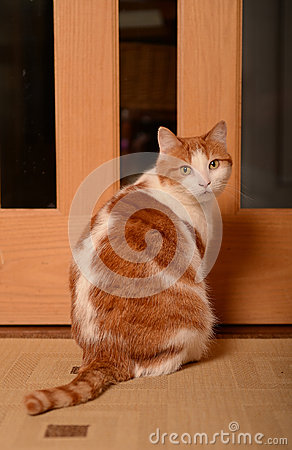 Cat waiting by door