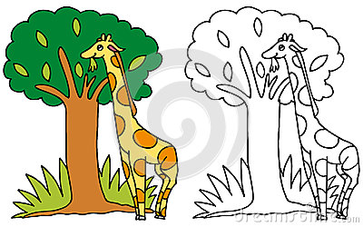 Cute giraffe eating leaves COLOR and BW