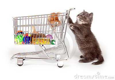 Cute gray kitten pushing shopping cart