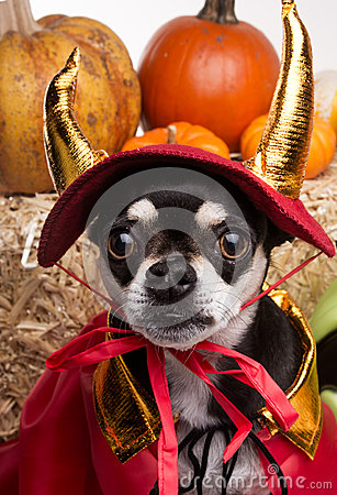 Free Cute Halloween Devil Dog Stock Image - 27194701