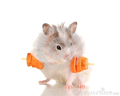 Cute hamster with carrot bar