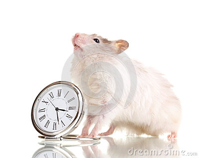Cute hamster and clock