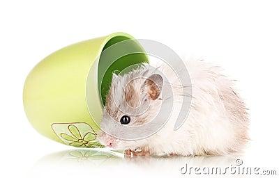 Cute hamster in cup