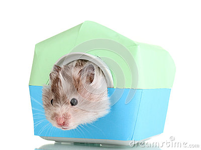 Cute hamster in house