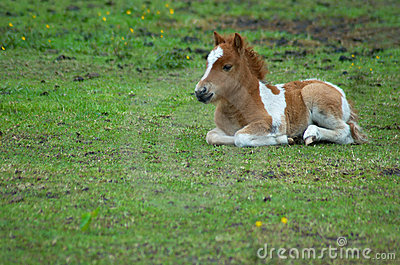 Cute horse in the grass