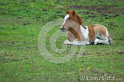 Cute horse in the grass