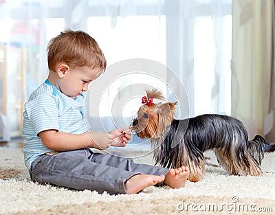Cute kid boy feeding pet dog york