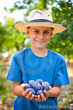Cute kid with a handful of plums