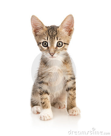 Free Cute Kitten Stock Photography - 13477992